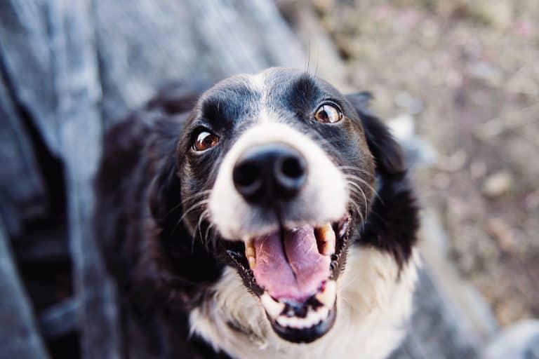 A dog looking up towards a camera