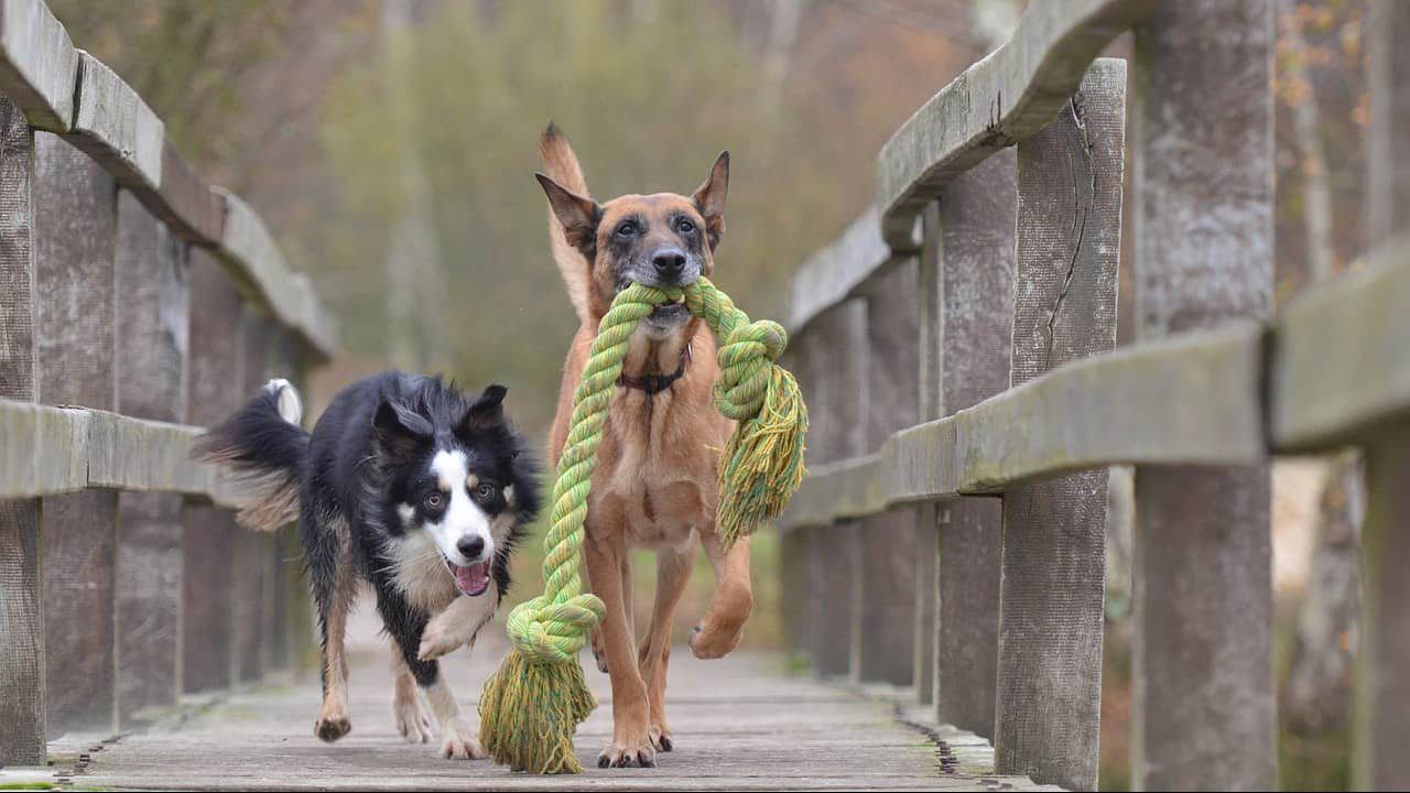 Do Kevlar Dog Toys Exist? + 7 FANTASTIC Durable Dog Toys