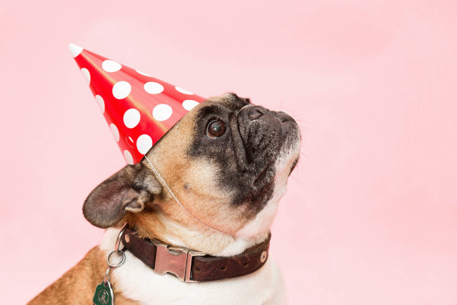 A picture of a dog wearing a birthday hat