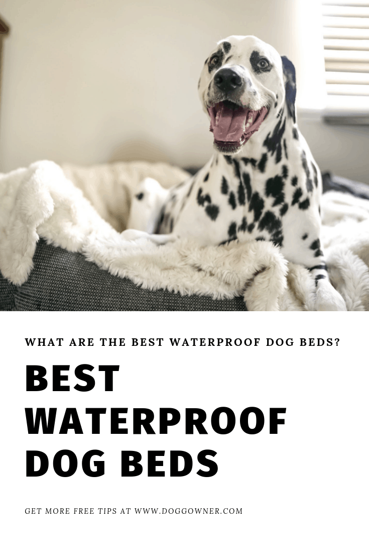 A best waterproof dog beds pinterest picture