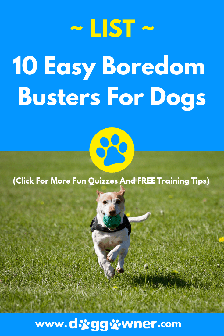 The 10 boredom busters for dogs DoggOwner pinterest image