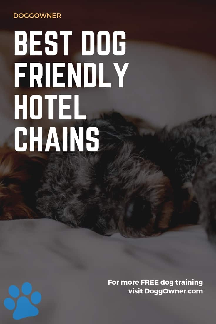 A best dog friendly hotel chains pinterest image