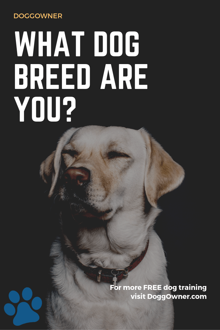 What dog breed are you Pinterest image
