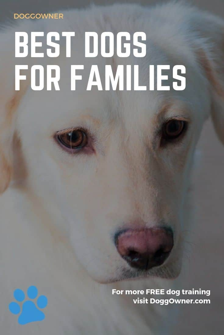 Best dogs for families Pinterest image