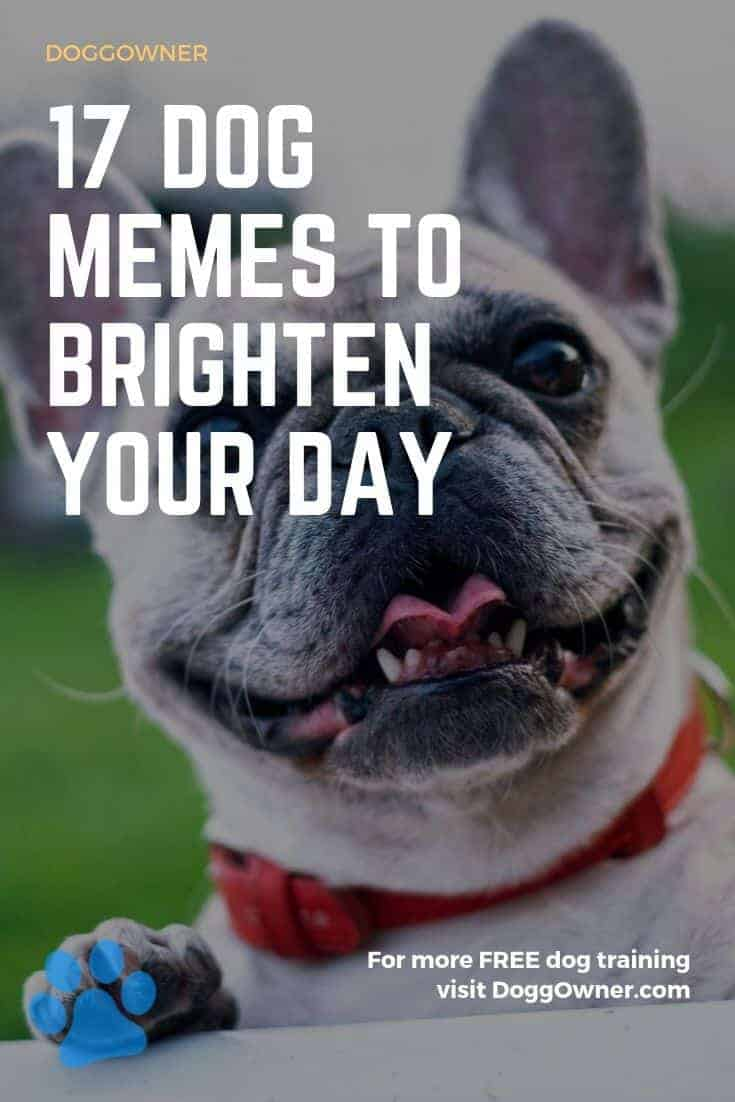 17 dog memes to brighten your day pinterest image