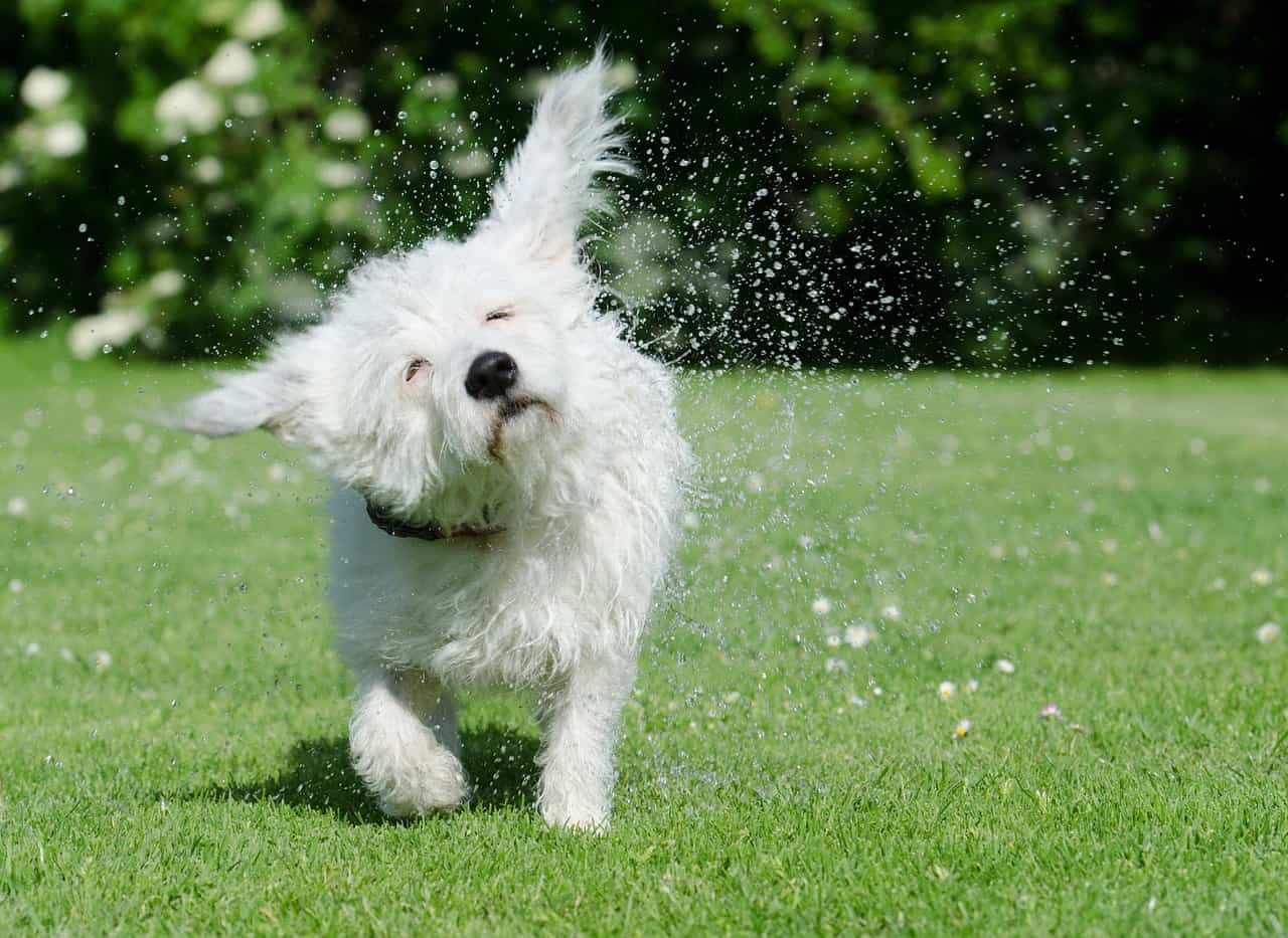 10 Helpful Dog Bathing Tips in 2020