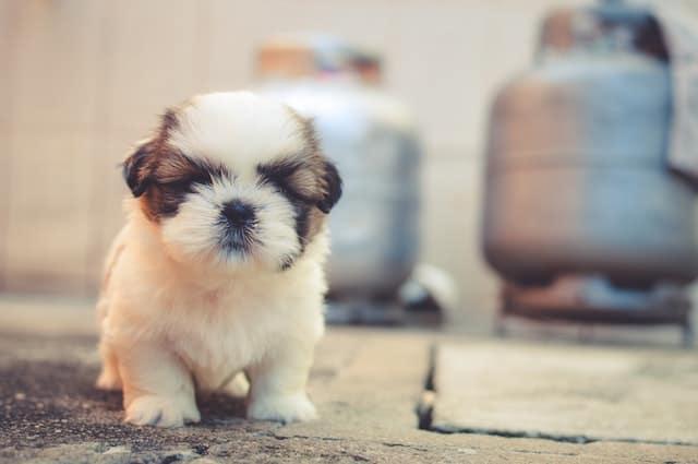 A cute puppy sitting on the sidewalk