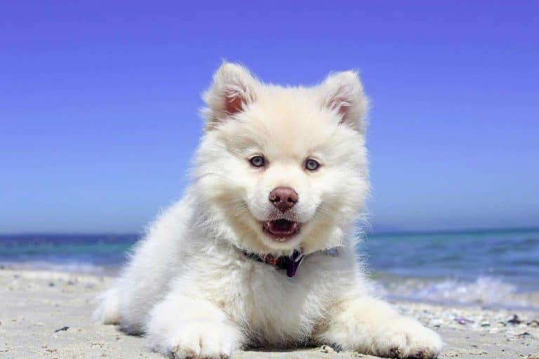 A dog laying on a beach