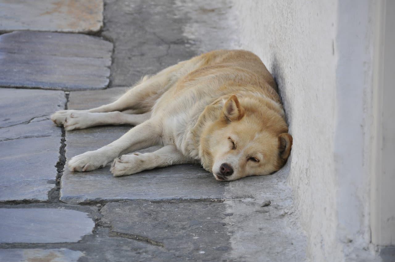 5 Best Outdoor Dog Beds in 2020