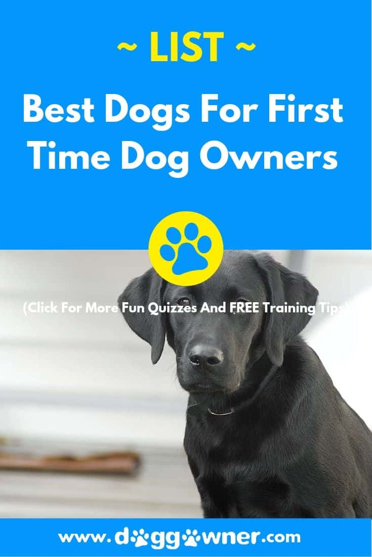 Best dogs for first time dog owners pinterest image