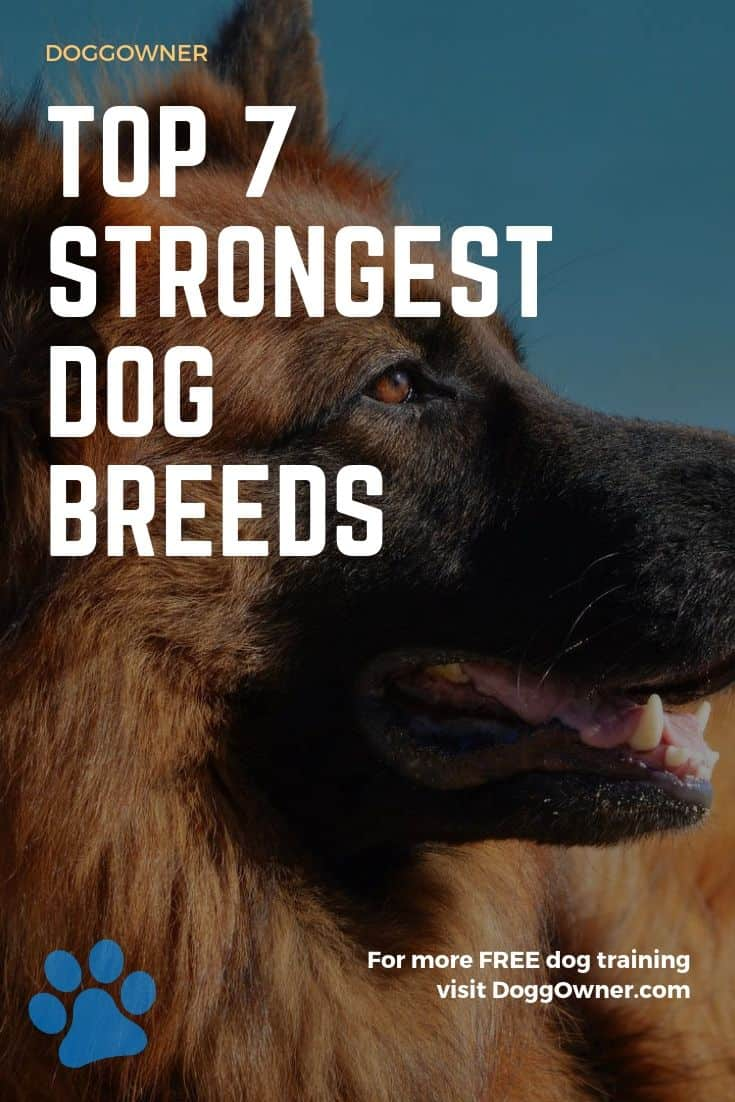 Top 7 strongest dog breeds pinterest image