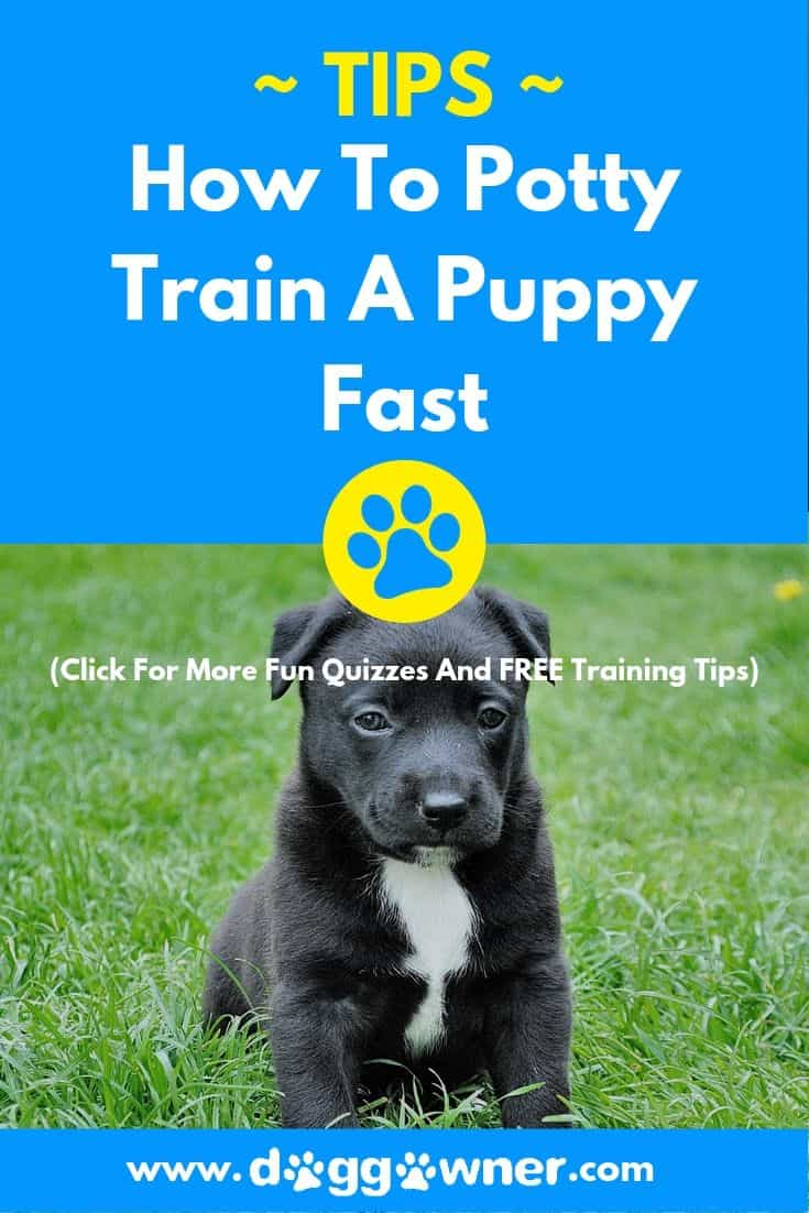 How to potty train a puppy fast pinterest image