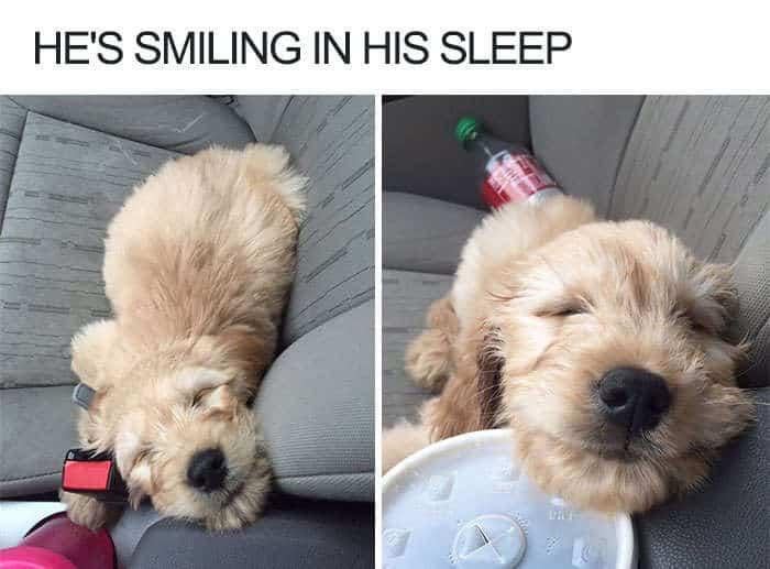 He's smiling in his sleep dog meme