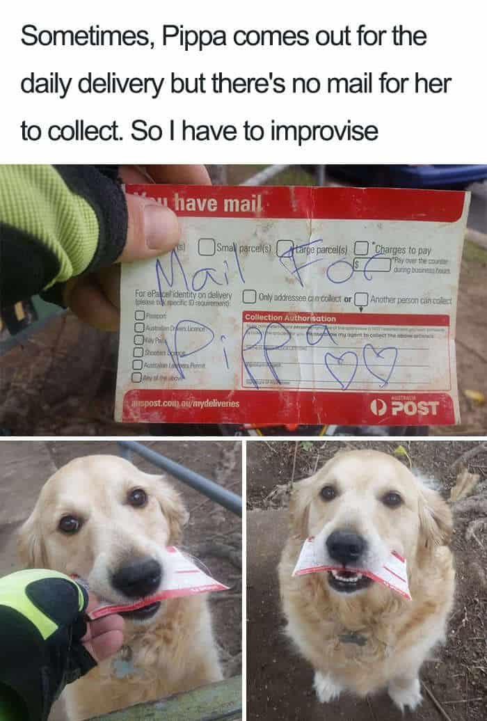 A dog that is pretending to be a mailman meme