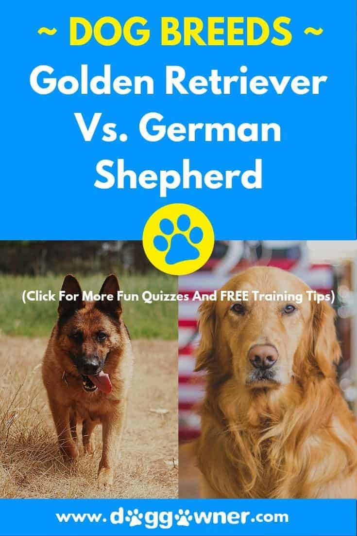 German Shepherd vs Golden Retriever pinterest image