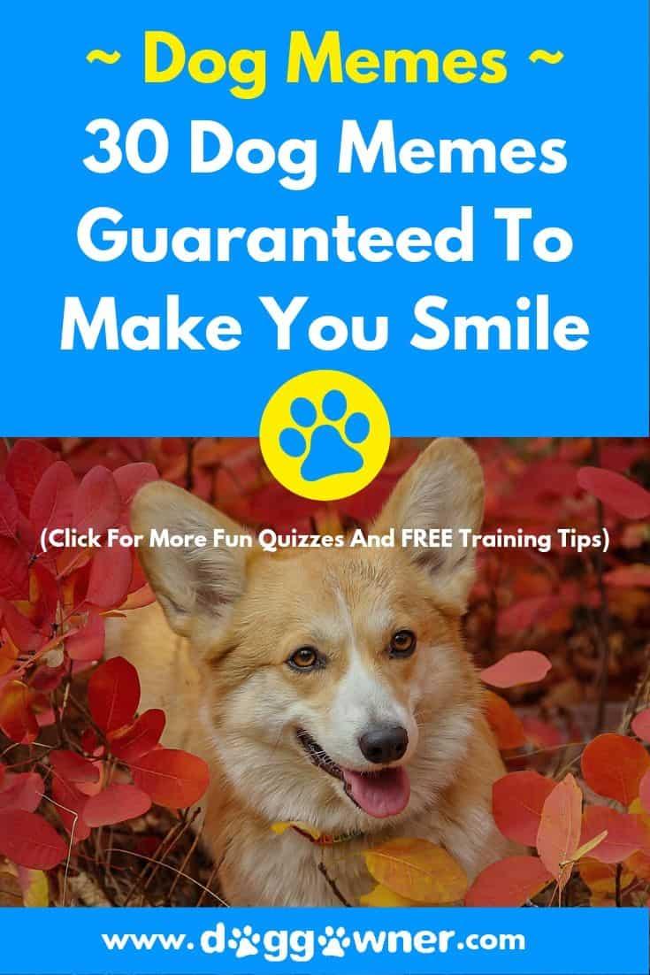The 30 dog memes guaranteed to make you smile pinterest image