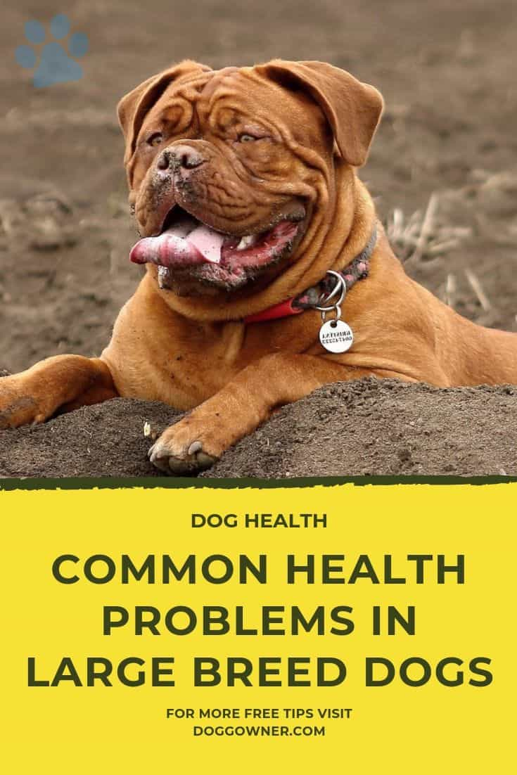 COMMON HEALTH PROBLEMS IN LARGE BREED DOGS Pinterest Image