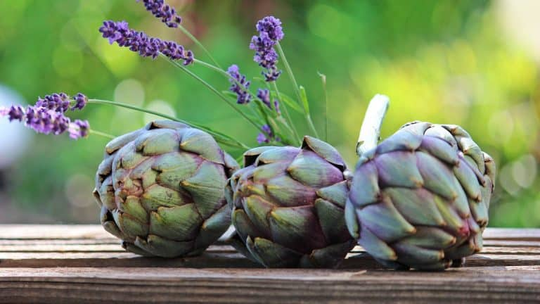 "Three artichokes on a wood slab to represent the topic of the article topic ""Can dogs eat artichokes"""