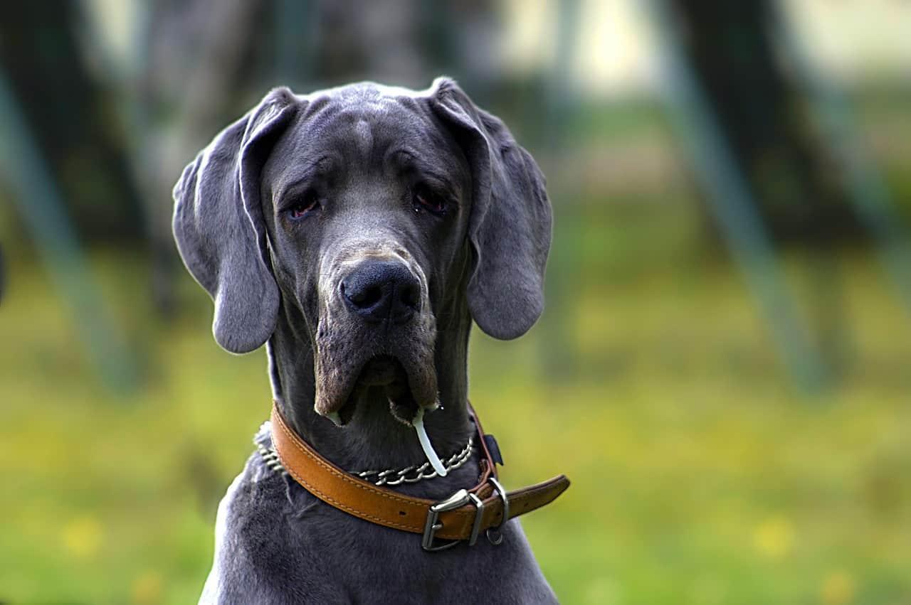 5 Best XXXL Dog Crates In 2020