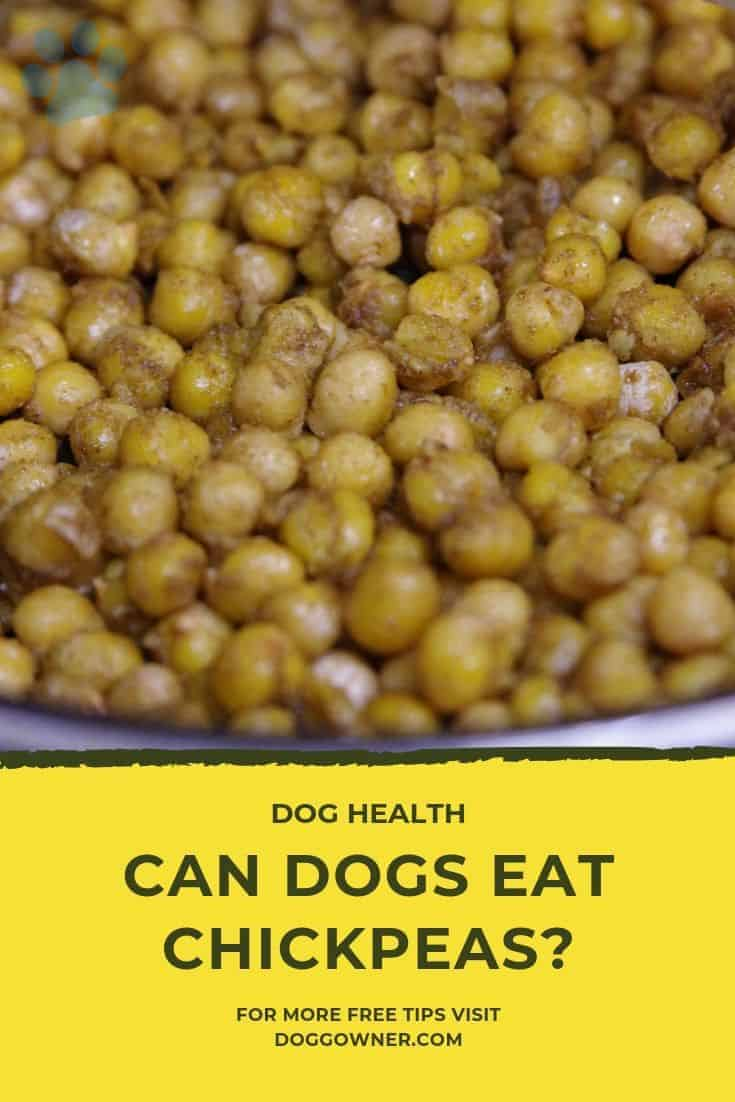Can dogs eat chickpeas Pinterest image