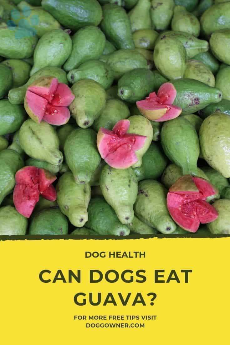 Can dogs eat guava Pinterest image