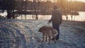 A dog heeling next to a human walking in the snow