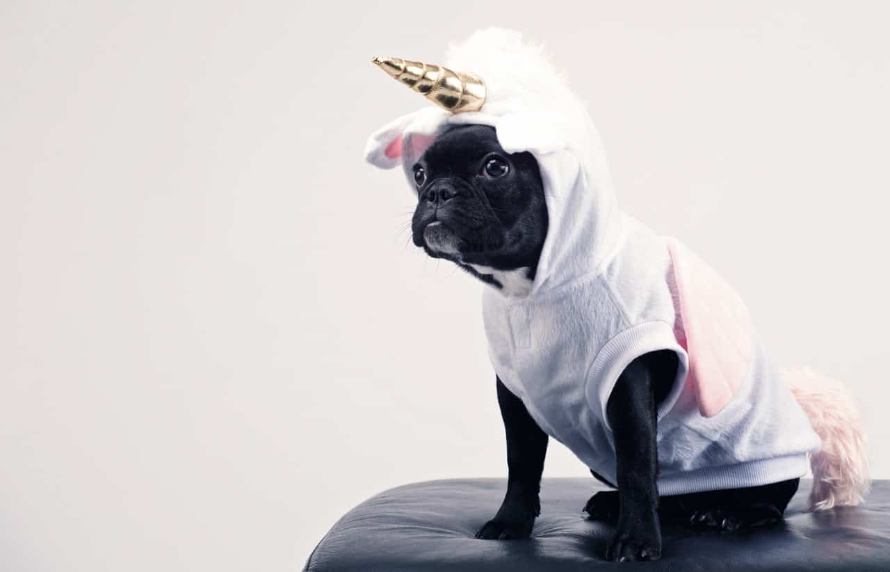 A black dog wearing a unicorn costume