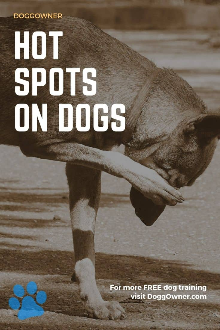 Hot spots on dogs pinterest image