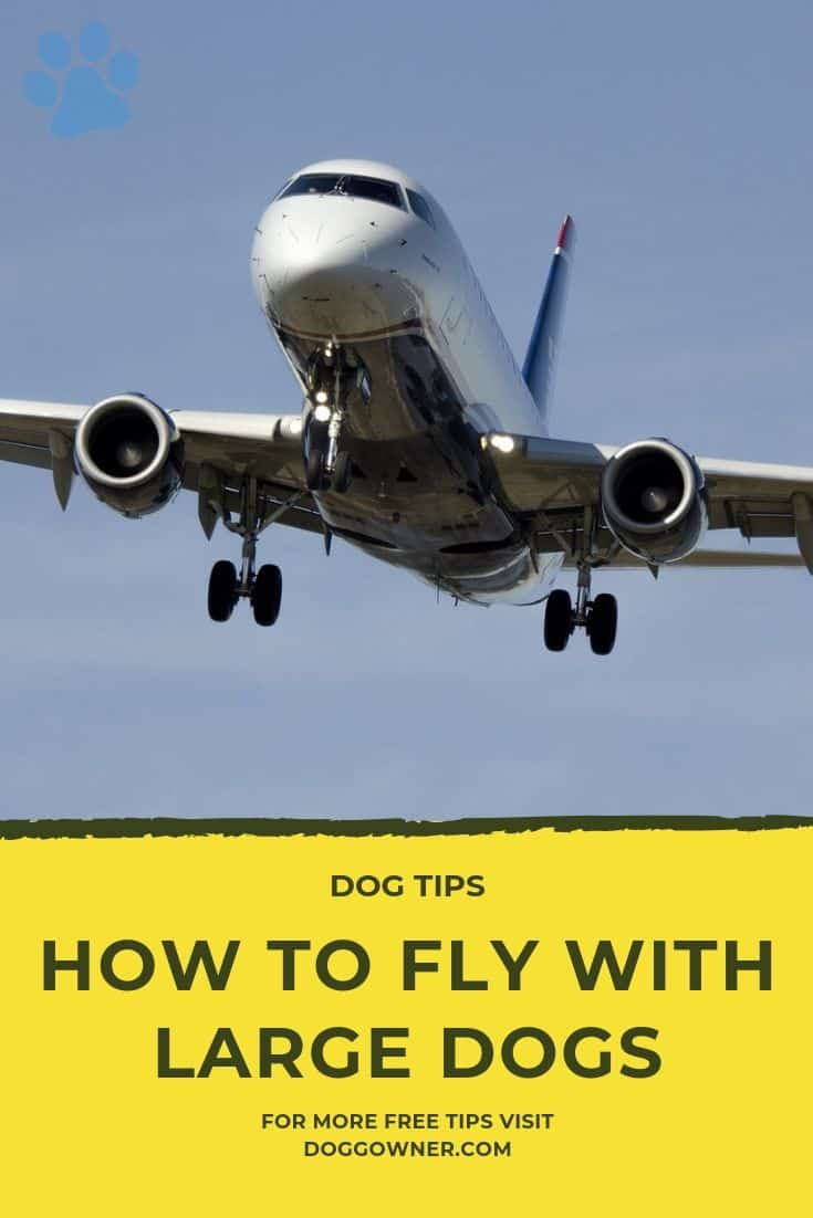 How to fly with large dogs pinterest image
