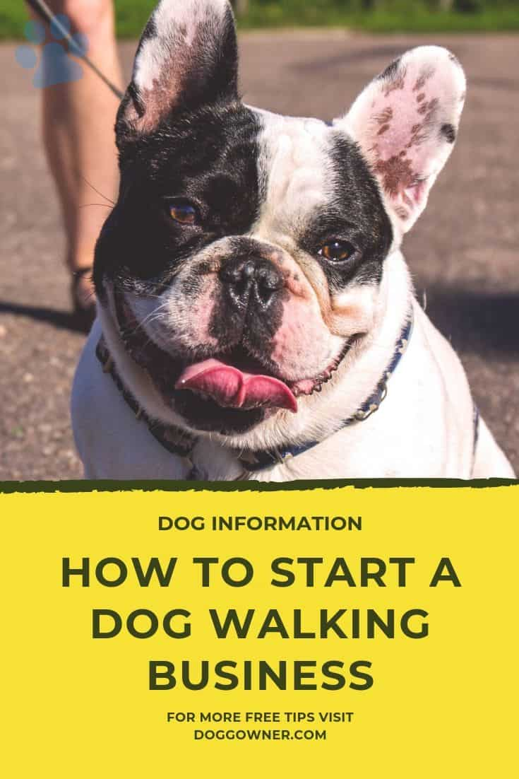 How to start a dog walking business Pinterest image.
