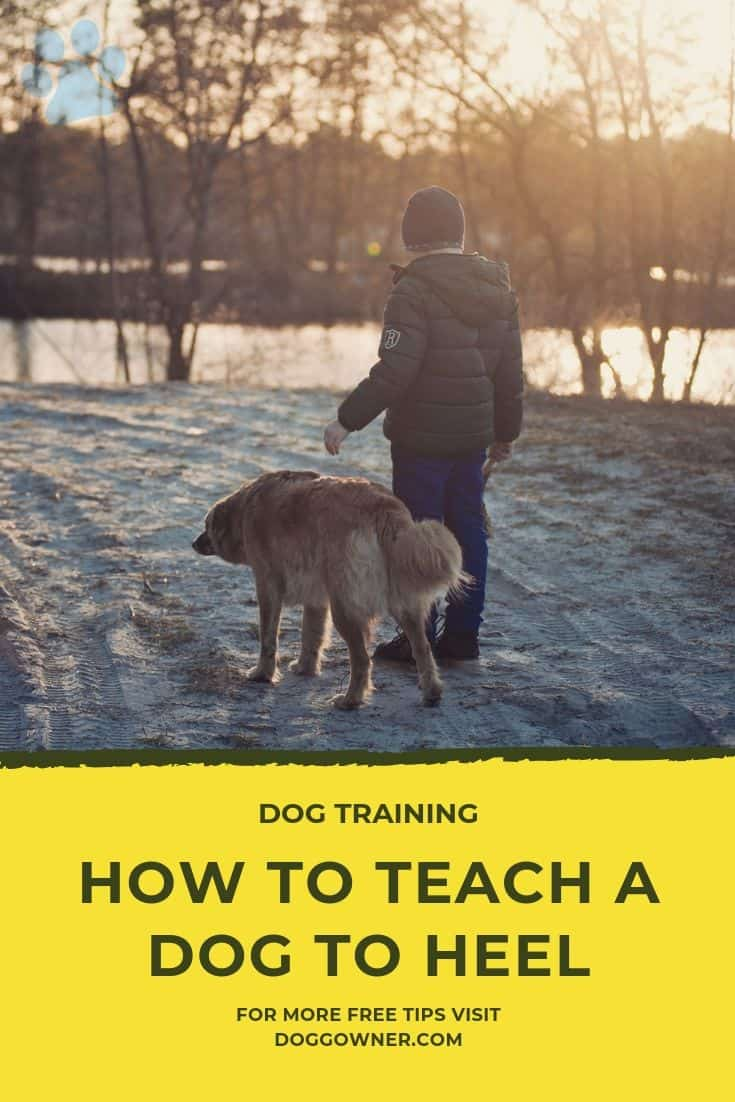 How to teach a dog to heel Pinterest image