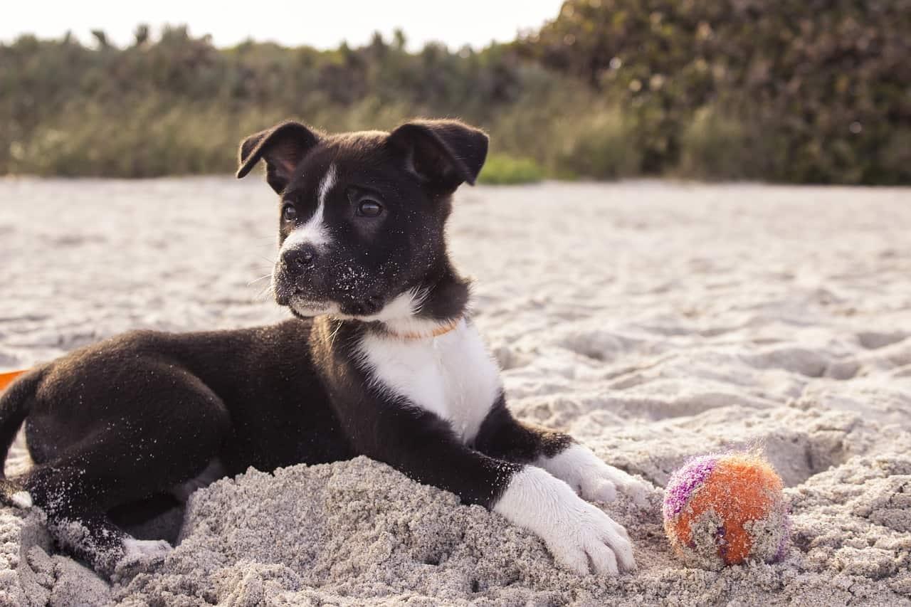 6 Best Dog Balls in 2020