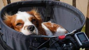 Best dog bike carrier cover image