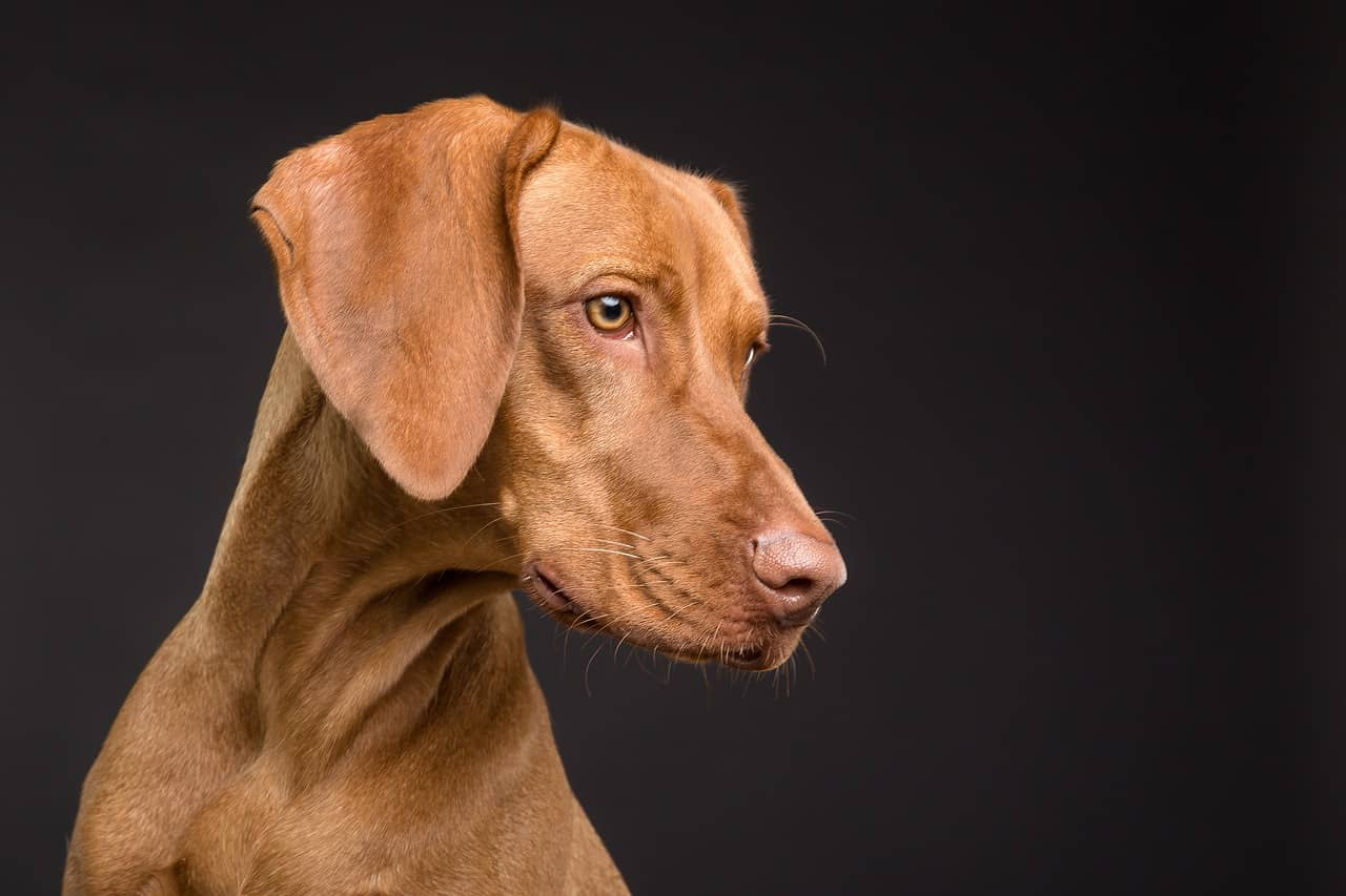 Can Dogs Have Strokes?