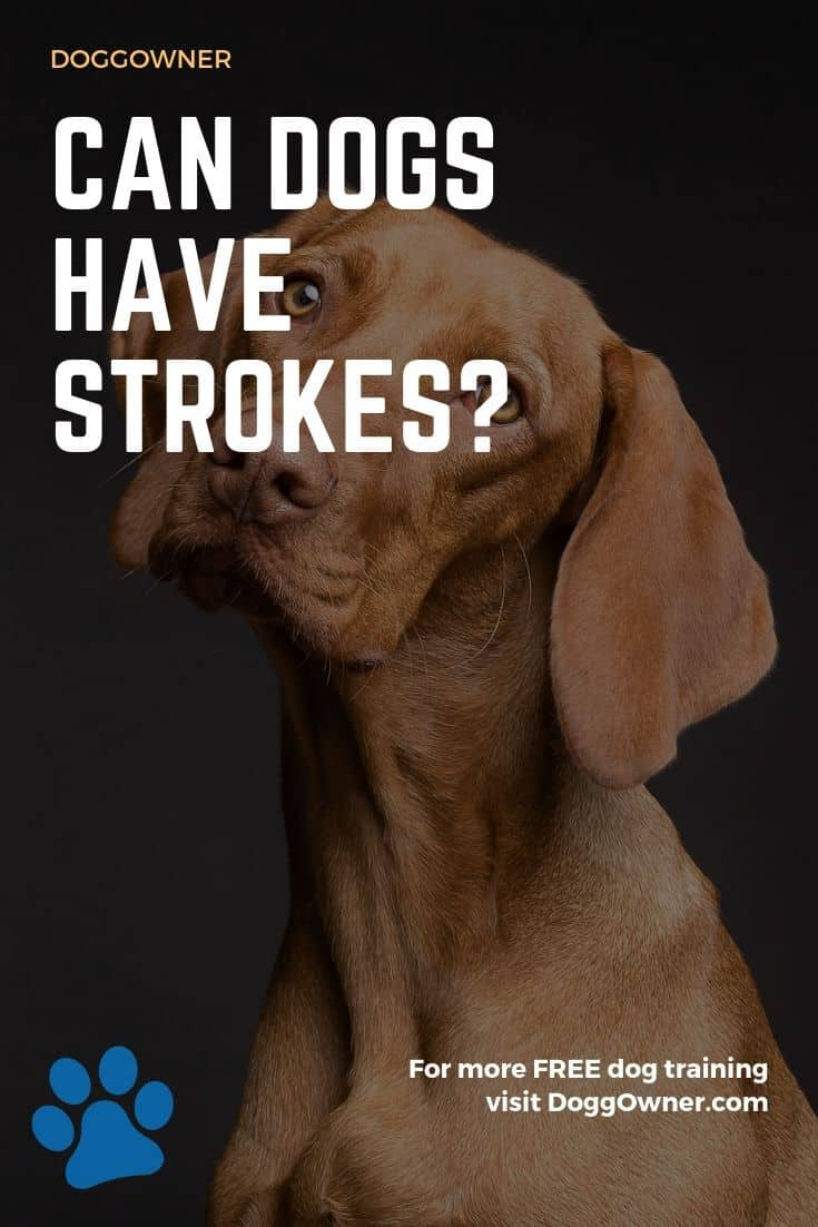 Can dogs have strokes Pinterest image