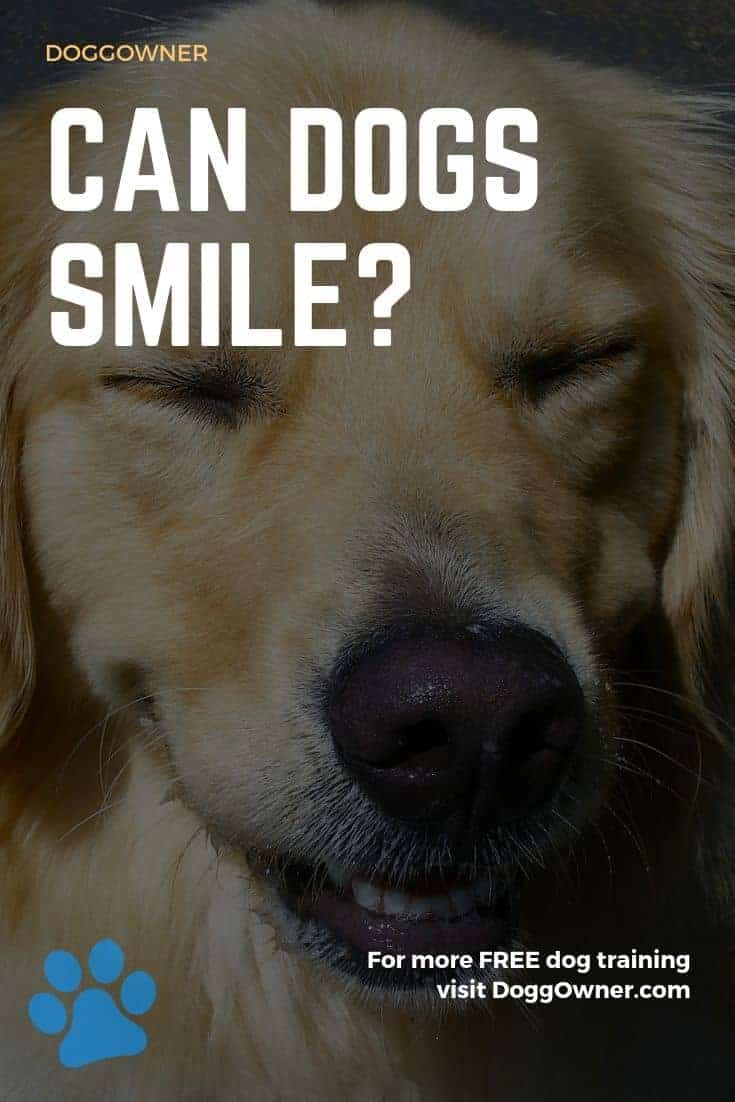 Can dogs smile Pinterest image