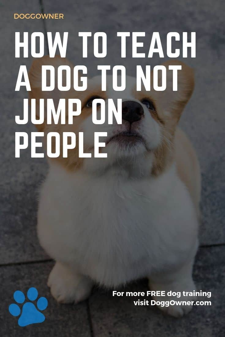 How to teach a dog to not jump on people Pinterest image