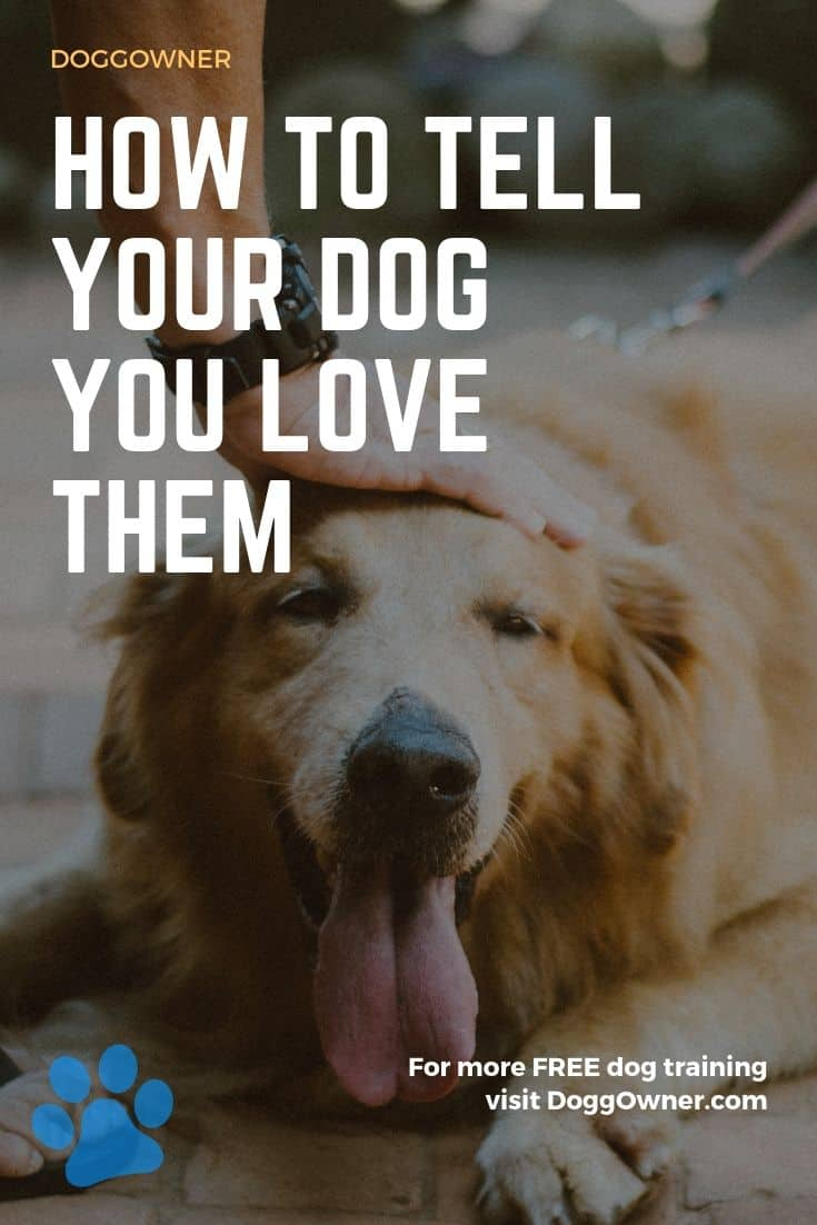 How to tell your dog you love them Pinterest image