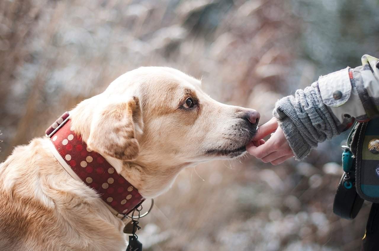 7 Mental Health Benefits Of Owning A Dog