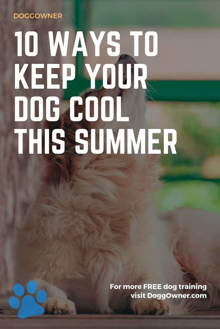 Ways to keep dogs cool Pinterest image