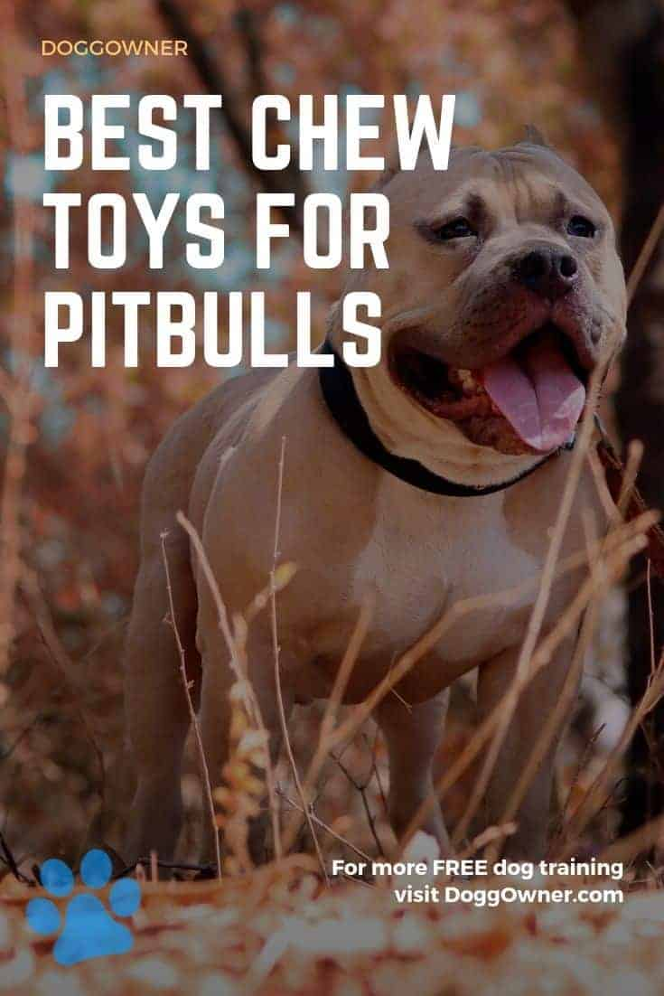 Best chew toys for Pitbulls Pinterest image
