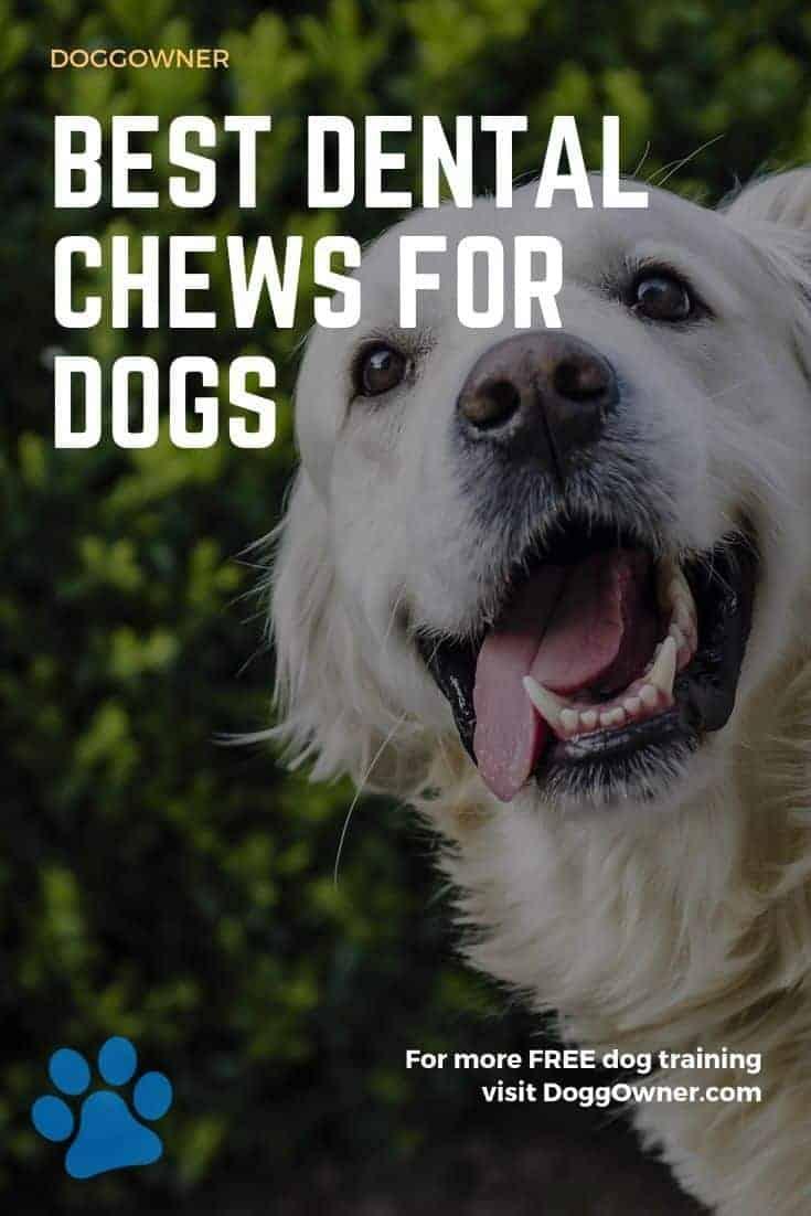 Best dental chews for dogs Pinterest image