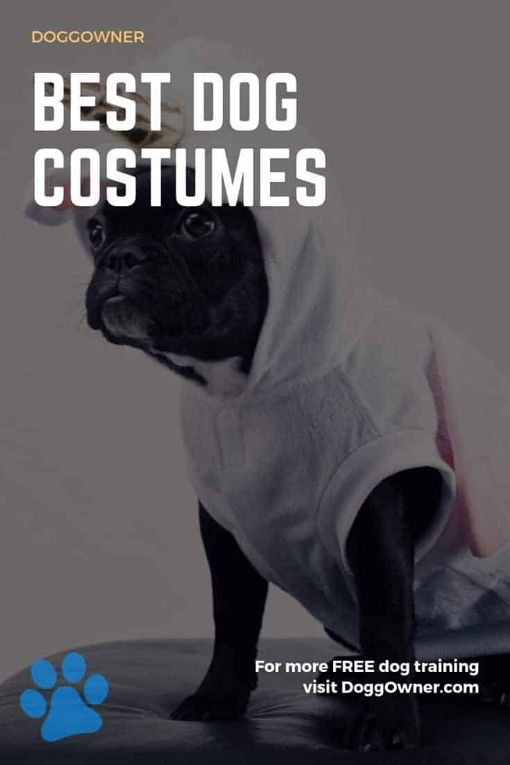 Best dog costumes Pinterest image