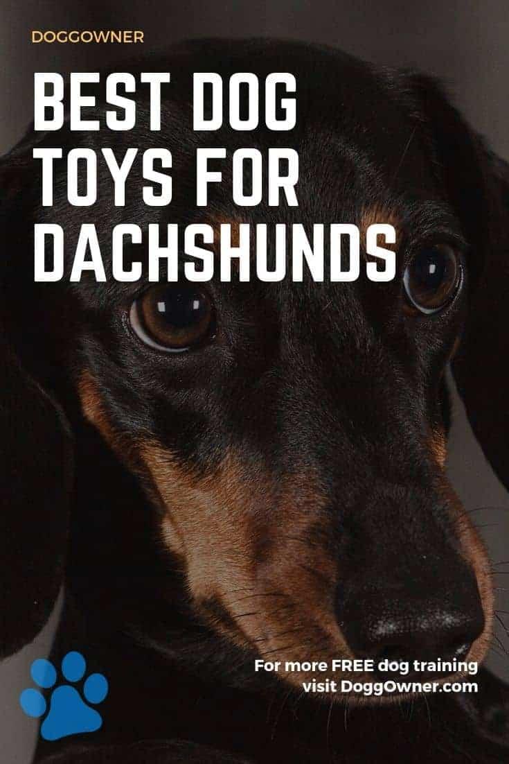 Best dog toys for Dachshunds Pinterest