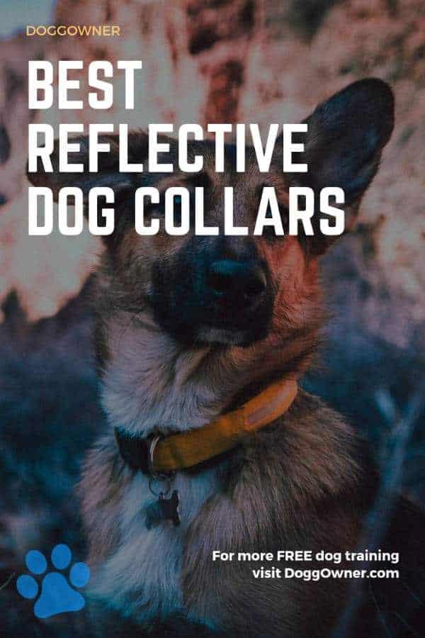 Best reflective dog collars Pinterest image