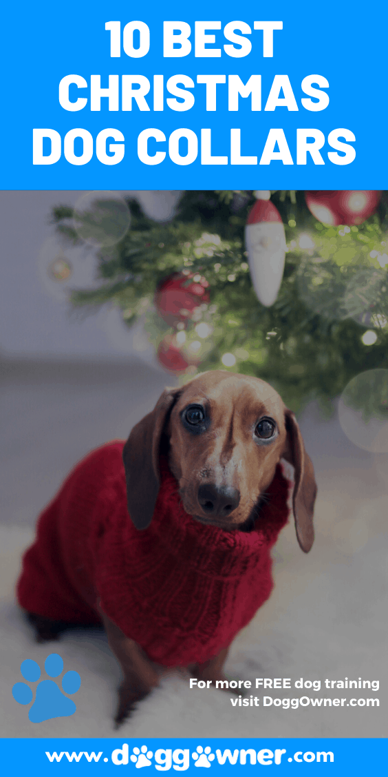 Best Christmas Dog Collars Pinterest Image
