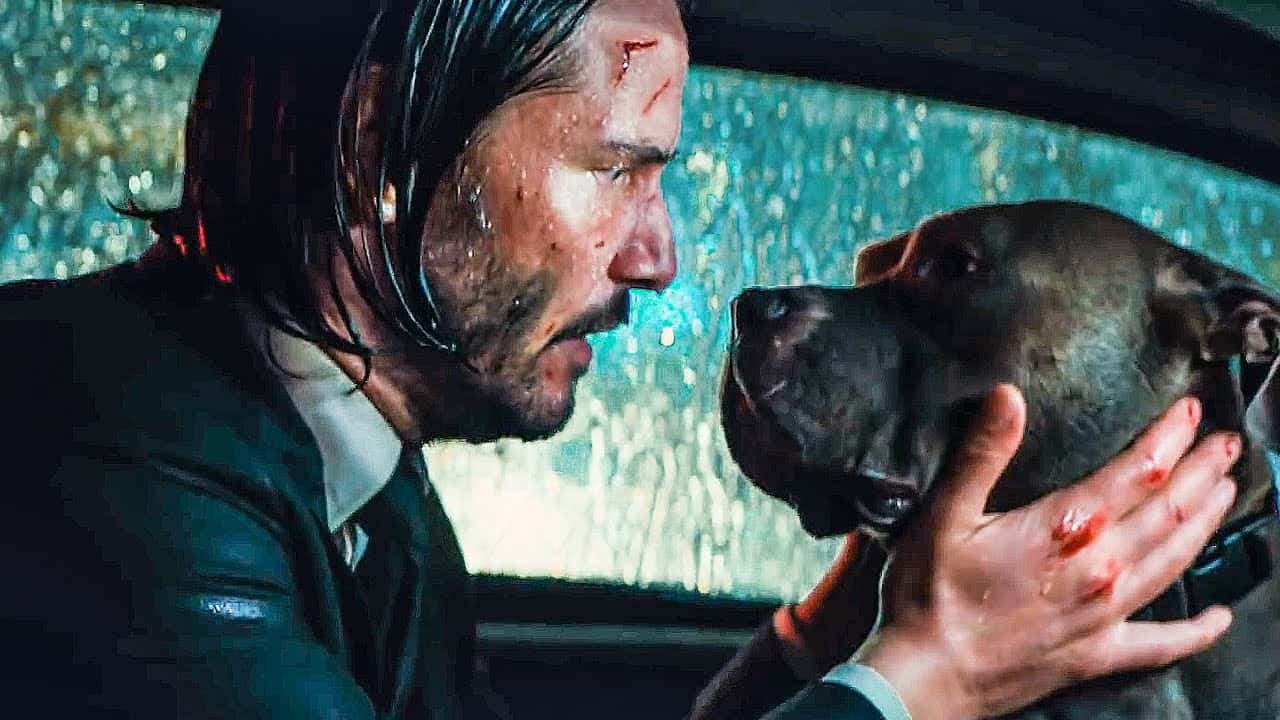 John Wick Dogs: What Kind Of Dog Did John Wick Have?