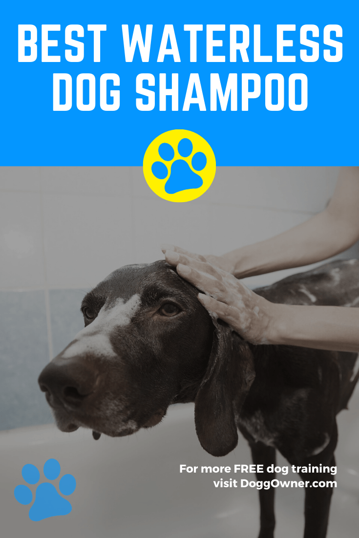 Best waterless dog shampoo Pinterest image.