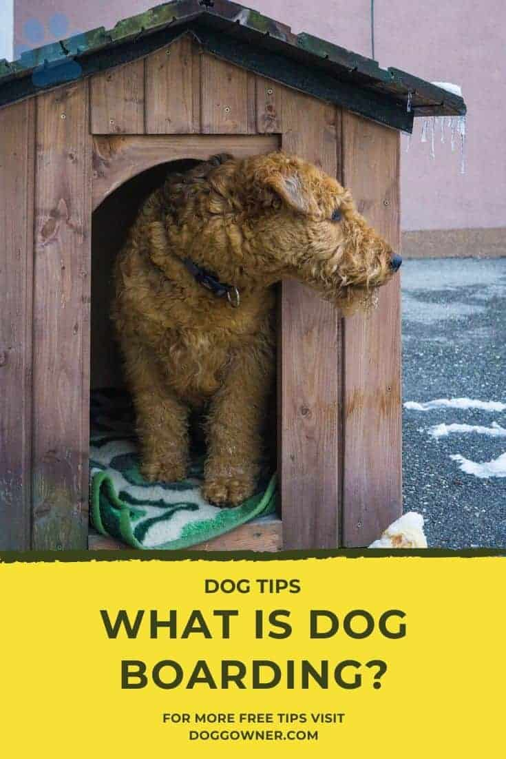 What Is Dog Boarding Pinterest Image