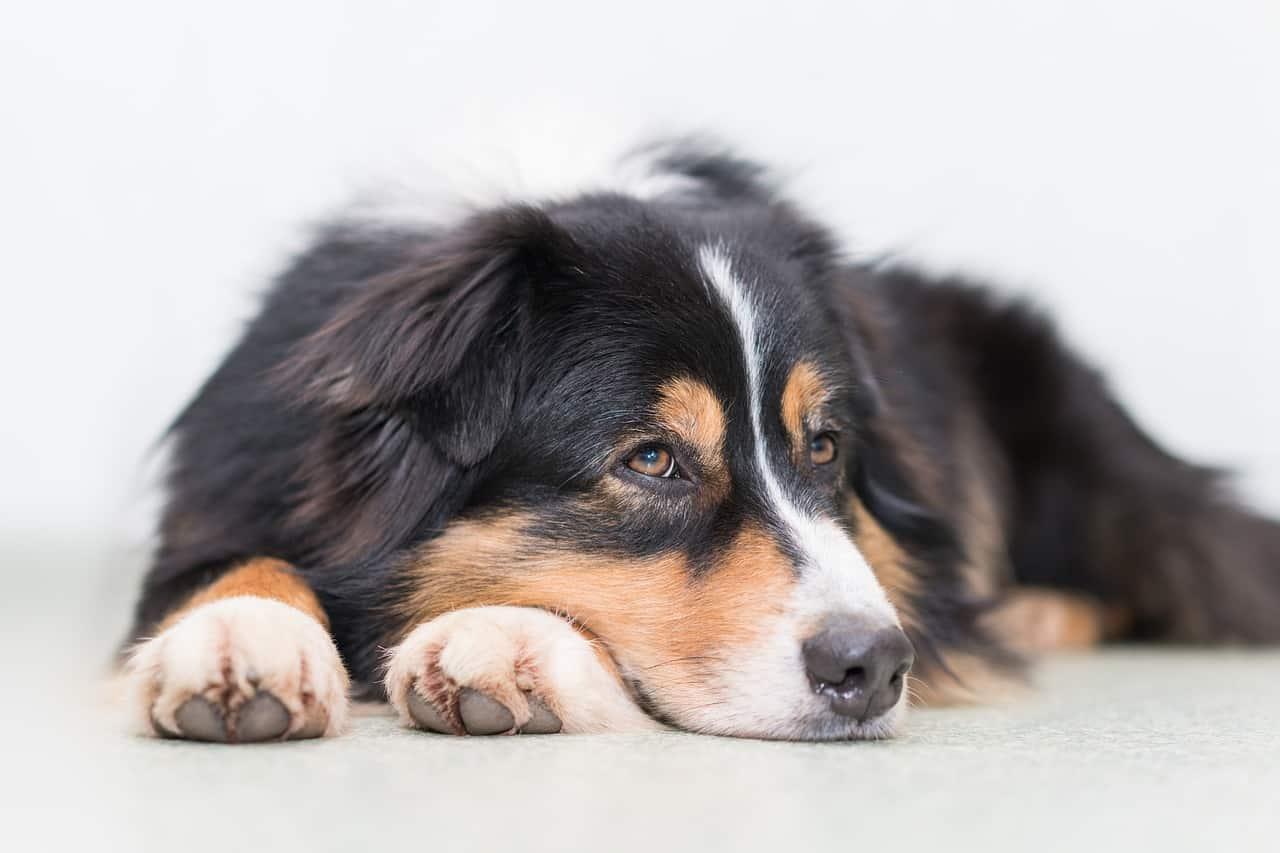85 Outstanding Australian Dog Names